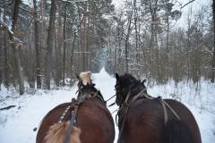 DSC_3483 (www.fotoss.pl)